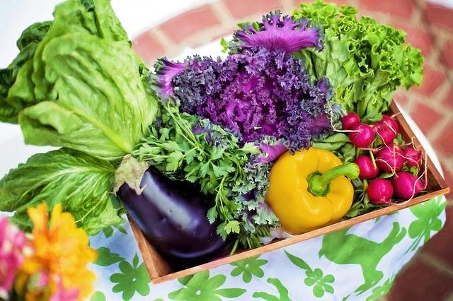 vendee mag conseil jardinage mois de mars - entretien de jardin plantation potager fleur idées2